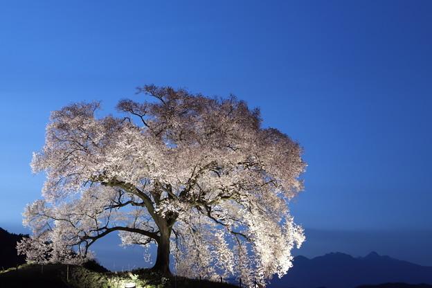 R3わに塚の桜