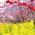 甲州の春色