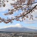 Photos: 新倉山浅間公園3