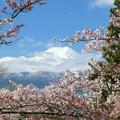 新倉山浅間公園2