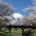忍野の春3