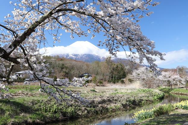 忍野の春5