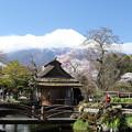 忍野の春6