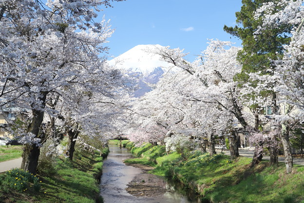 忍野の春7