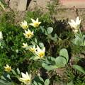 春の吉備路