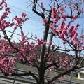 春の息吹感じる花