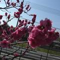 春になりました