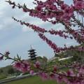 Photos: 春の花木
