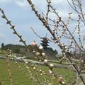 Photos: 花畑の春