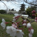 Photos: 自然の春