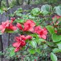 山で見た花