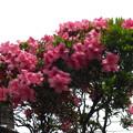 花壇に花が咲いてる
