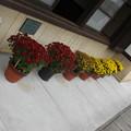 観光の四国の花