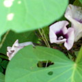 小さくてかわいい花