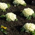 整備された花壇の花