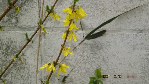2021/03/13(土)・黄色いお花