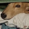 2021/04/03(土)・お姉ちゃんの腕枕で寝ているんだ(#^^#)