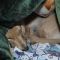 2021/04/05(月)・お姉ちゃんの足を温めてるんだ。毛布をめくらないでワン。