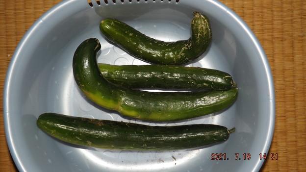 2021/07/18(日)・午後に採れたお野菜