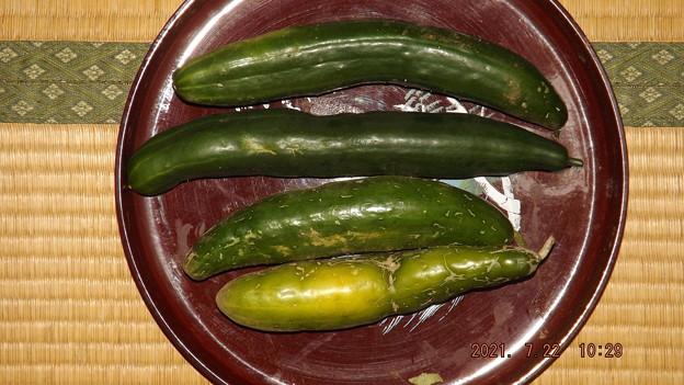 2021/07/22(木・祝)・朝採れたお野菜