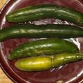 Photos: 2021/07/22(木・祝)・朝採れたお野菜