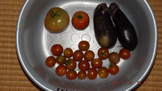 2021/07/23(金・祝)・午後に採れた野菜達