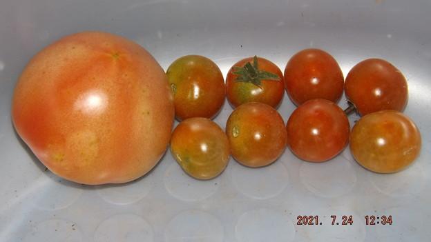 2021/07/24(土)・午後に採れた野菜達