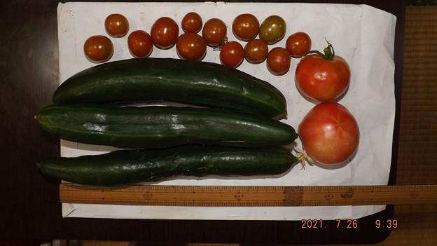 2021/07/26(月)・朝採れた野菜達