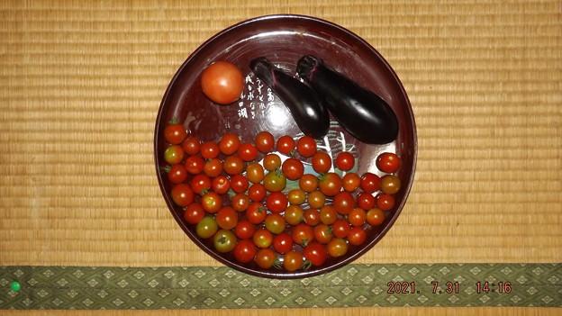 2021/07/31(土)・午後採れた野菜達