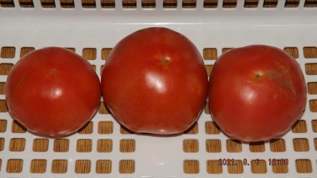 2021/08/06(金)・午後に採れたお野菜