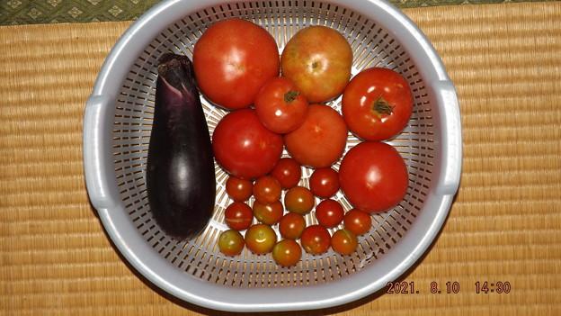 2021/08/10(火)・午後に採れた野菜達