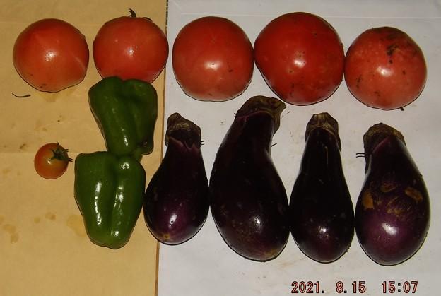 2021/08/15(日)・雨の中、午後に採れた野菜達