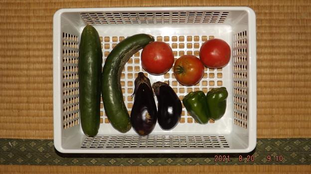 Photos: 2021/08/20(金)・朝に採れた野菜達