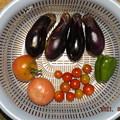 2021/08/22(日)・朝に採れた野菜達
