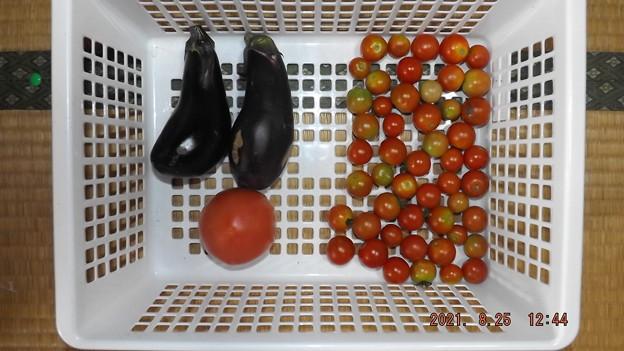 2021/08/25(水)・午後に採れた野菜達