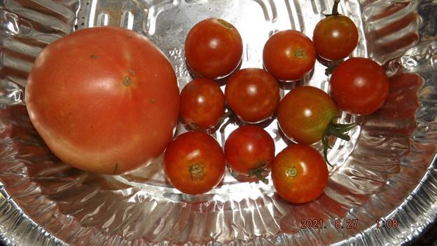 Photos: 2021/08/27(金)・午後に採れた野菜達