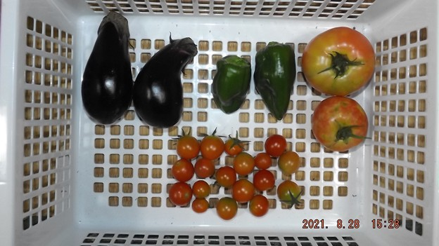 2021/08/28(土)・午後に採れた野菜達