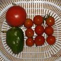 Photos: 2021/09/02(木)・雨の中の午後に採れた野菜達