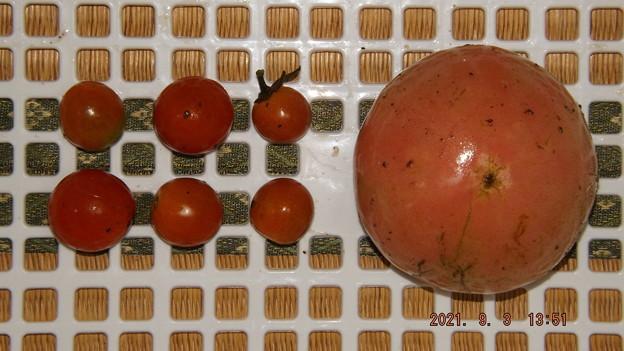 2021/09/03(金)・午後に採れた野菜達