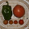 Photos: 2021/09/04(土)・雨の中、午後に採れた野菜達