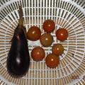 2021/09/06(月)・お昼前に採れた野菜達