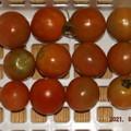 2021/09/07(火)・午後に採れた野菜