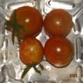 2021/09/08(水)・午後に採れた野菜