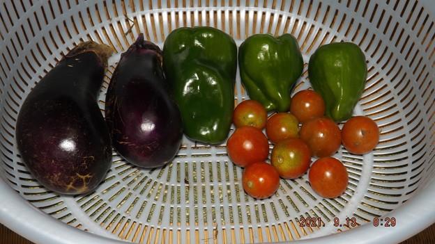 2021/09/13(月)・朝に採れた野菜達