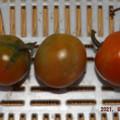 Photos: 2021/09/19(日)・午後に採れた野菜