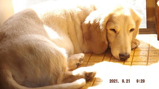 Photos: 2021/09/21(火)・台所でひなたぼっこ