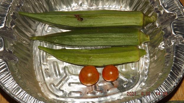 2021/09/21(火)・午後に採れた野菜達