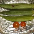 Photos: 2021/09/21(火)・午後に採れた野菜達