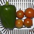 Photos: 2021/09/22(水)・午後に採れた野菜達
