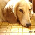 """Photos: 2021/09/23(木・祝)・台所でひなたぼっこ(""""^ω^)・・・"""
